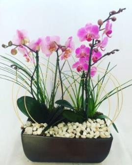 Arreglo Floral Con 3 Orquídeas