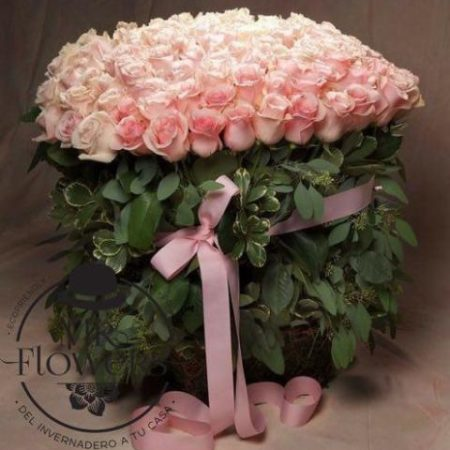 100 Rosas Rosa